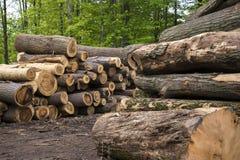 Vio los registros, árboles, serrería, madera de construcción Imágenes de archivo libres de regalías