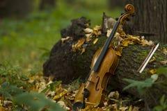 Violín en bosque del otoño Imagen de archivo libre de regalías
