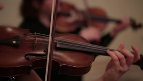 Violín Live Concert metrajes