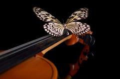 Violín y mariposa Fotografía de archivo libre de regalías