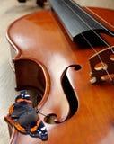 Violín y mariposa cuello de un violín Concha grande de la mariposa imagen de archivo