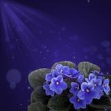 Violа violett designbakgrund. Royaltyfri Bild