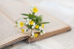 Viola auf dem geöffneten Buch Stockbild
