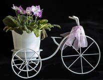 Viola and The Bicycle Driven flowerpot Royalty Free Stock Image