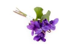 Viola Bouquet ( Viola Reichenbachiana ) Stock Image