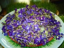Viola de nosso jardim em Zagatala azerbaijan foto de stock