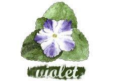 Viola del fiore della stanza dipinta in acquerello Fotografie Stock