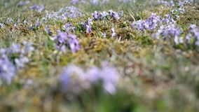 Viola di Heath archivi video