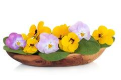Viola Flower Salad Stock Image