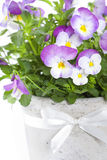 Viola flowers Royalty Free Stock Images