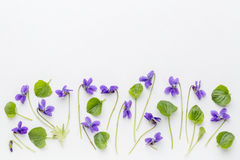 Viola flowers on art canvas Royalty Free Stock Photography