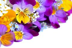 Viola flowers border. Colorful viola flowers border with copy space Royalty Free Stock Image