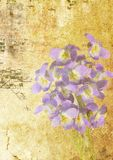Viola  grunge. Violet viola on grunge background Royalty Free Stock Image