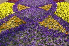 Viola-Hybrids in spring Stock Images
