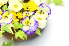 Viola and ivy Royalty Free Stock Image