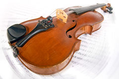 Viola Stock Photography