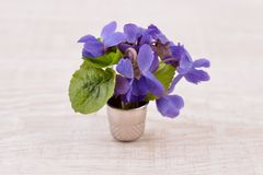 Viola odorata, Bouquet of violet flowers Royalty Free Stock Photo