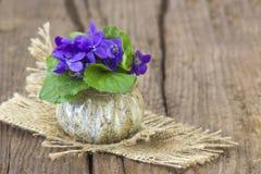 Viola odorata. Spring flowers bouquet Royalty Free Stock Image
