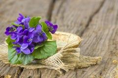 Viola odorata -  spring flowers bouquet Stock Photo