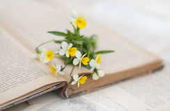 Viola on the opened book. On the light background Stock Image