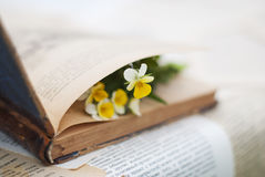Viola on the opened book. Table Stock Image