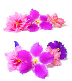 Viola perspective, fresh delicate flowers and petals, isolated o. N scrapbook background Royalty Free Stock Photography