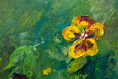 Viola with rain drops. Viola tricolor hortensis with rain drops, flower garden, oil painting on canvas, summer, sunny, picturesque vector illustration