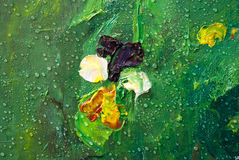 Viola with rain drops. Viola tricolor hortensis with rain drops, flower garden, oil painting on canvas, summer, sunny, picturesque Stock Photo