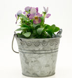 Viola in a tin can Stock Photography