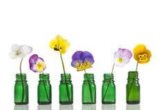 Viola tricolor nice pansies,essential oil in bottle Stock Image
