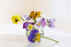 Viola tricolor nice pansies ,in glass jar Royalty Free Stock Photography