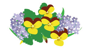 Viola und Vergissmeinnichtblumen. Lizenzfreie Stockfotos