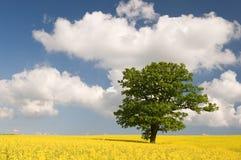 Violación con el árbol verde Imagen de archivo