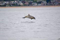 Violazione del delfino Immagini Stock Libere da Diritti