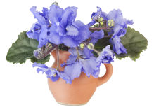 Viole blu delicate in una piccola brocca Fotografia Stock Libera da Diritti