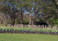 Viole del pensiero porpora, tulipani rosa, digitale multicolore con gli alberi dietro Fotografia Stock