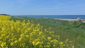 Viole el campo en la costa de mar Báltico en primavera Fotos de archivo libres de regalías