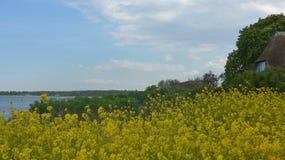 Viole el campo en la costa de mar Báltico en primavera Fotografía de archivo libre de regalías