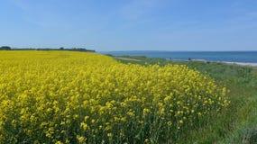Viole el campo en la costa de mar Báltico en primavera Imágenes de archivo libres de regalías