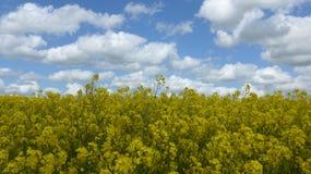 Viole el campo en primavera en un día soleado, pero nublado Imagen de archivo