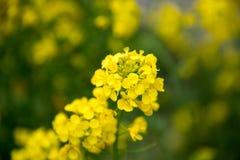 Viole la flor Imágenes de archivo libres de regalías