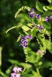 Viole la flor del color en un jardín Imagenes de archivo