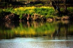 Viole los flores en la orilla/el paisaje japonés en marzo Imagen de archivo libre de regalías