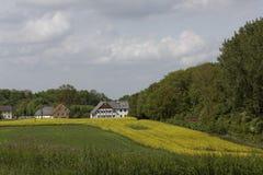 Viole o campo com casas velhas em maio, Hilter, região do país de Osnabrueck, Alemanha Fotografia de Stock Royalty Free