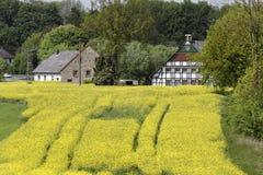 Viole o campo com casas velhas em maio, Hilter, região do país de Osnabrueck, Alemanha, Europa Fotografia de Stock