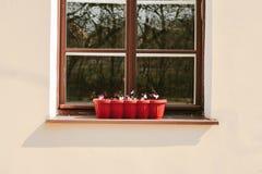 Viole in un vaso di plastica sulla finestra immagine stock