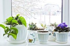 Viole in un vaso sulla finestra fotografie stock libere da diritti