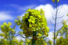 Violenza di fioritura Fotografie Stock Libere da Diritti