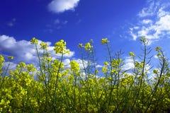 Violenza di fioritura Fotografie Stock