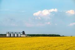 Violenza di giallo del silo dell'azienda agricola di agricoltura Immagine Stock